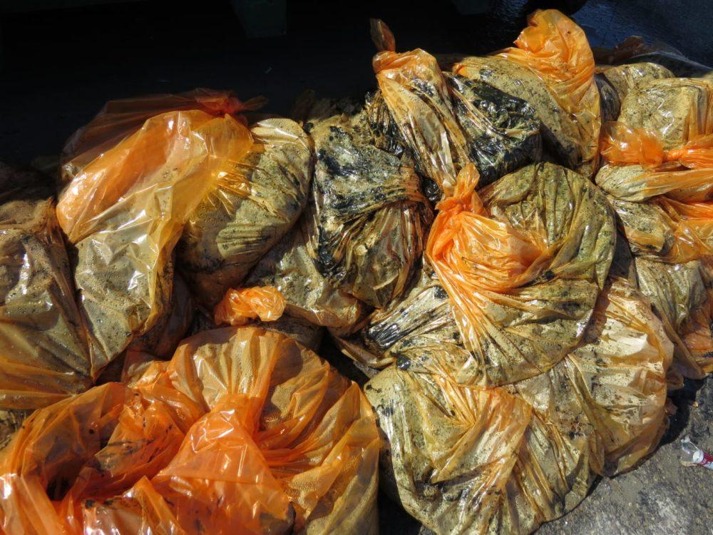 """שקיות זפת שנאספו ע""""י מתנדבים (צילום: מוטי מנדלסון)"""
