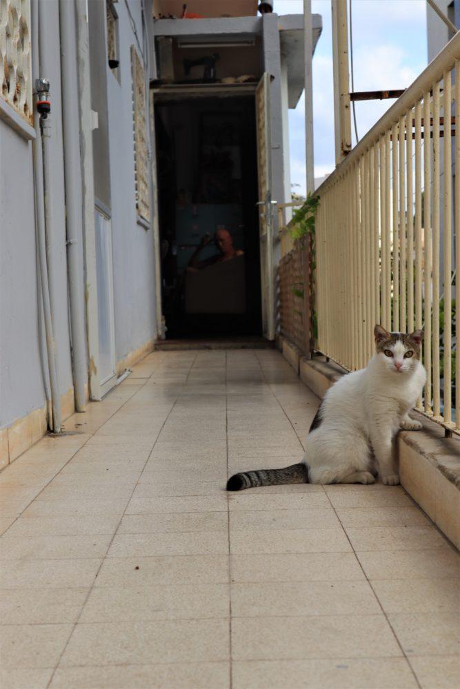 חברו הטוב ביותר של האדם, אחרי הכלב (צילום: עומר מוזר)