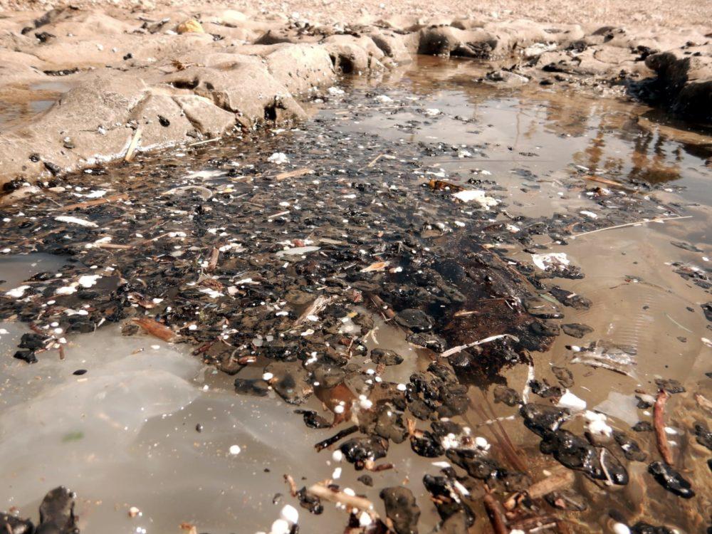 זפת ממשיכה להיערם ולגבות חיים - חוף שקמונה (צילום: מוטי מנדלסון)