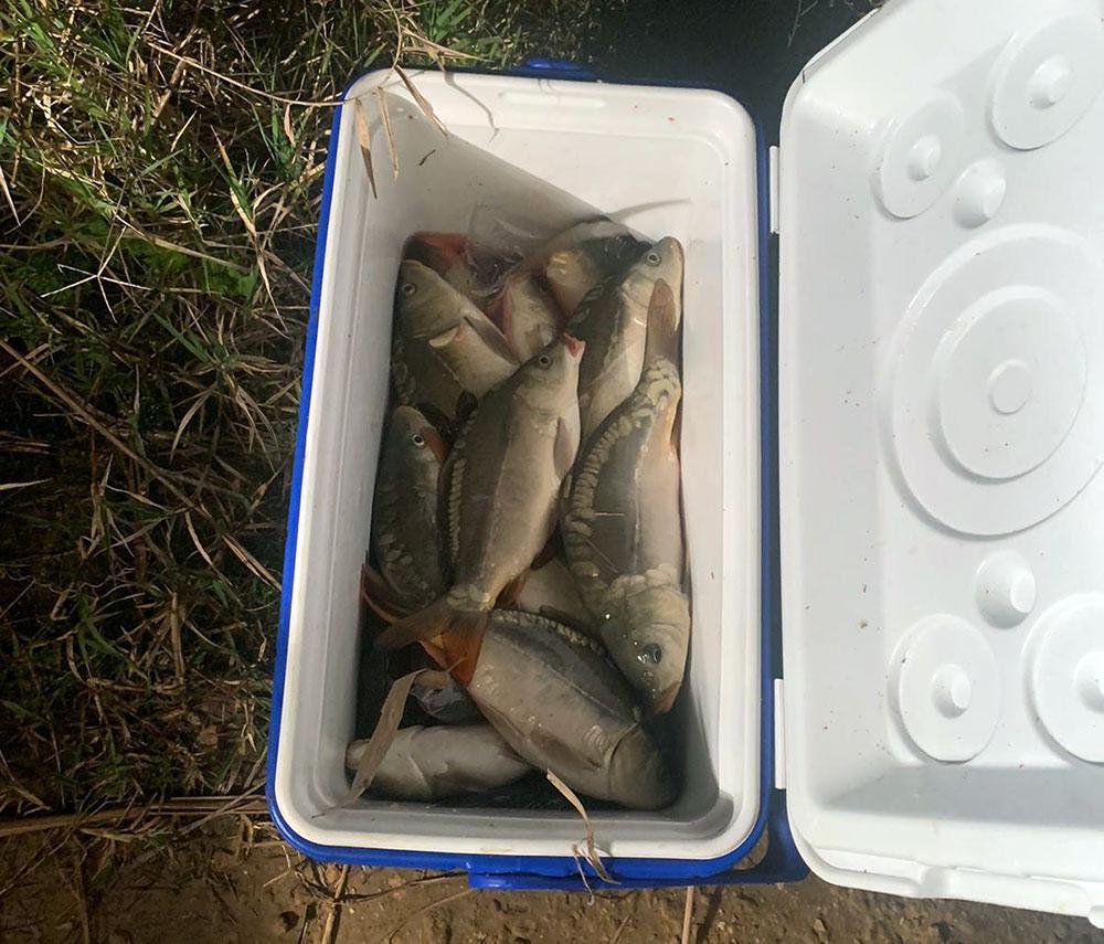 קרפיונים בצידנית • נתפסו ונעצרו דייגי קרפיונים בבריכות מעגן מיכאל (צילום: משמר הגבול)