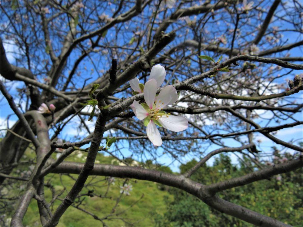פריחת האביב (צילום: מוטי מנדלסון)