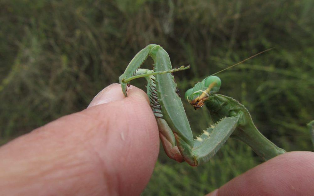 חרקים באזורי הטבע (צילום: מוטי מנדלסון)