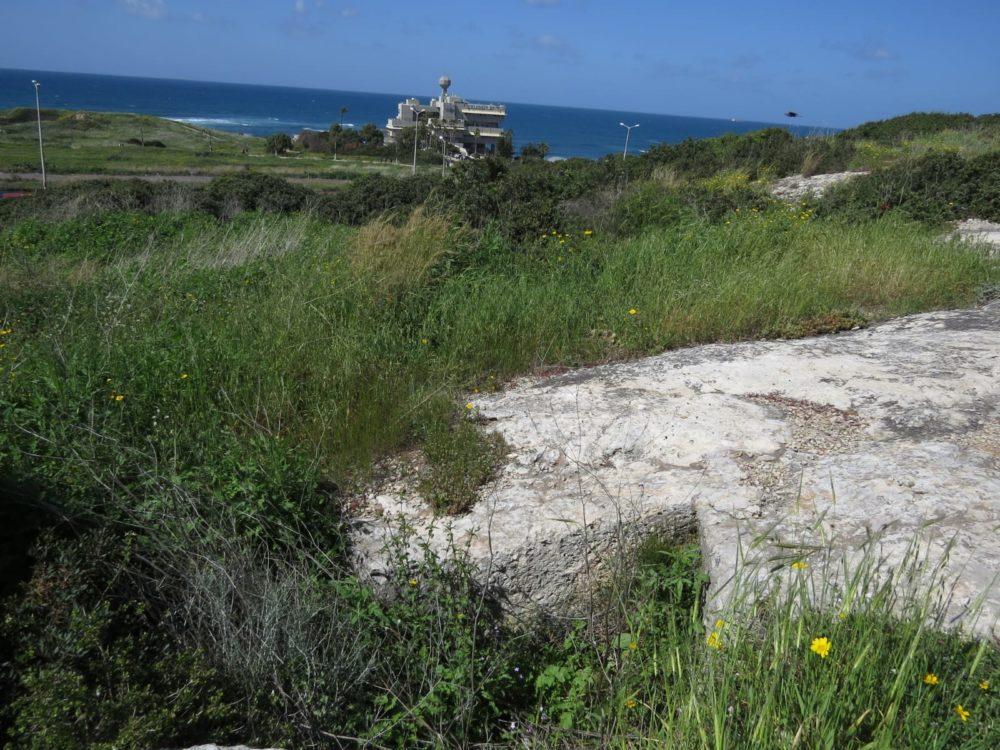 אזורים בחיפה שנותרו ירוקים (צילום: מוטי מנדלסון)