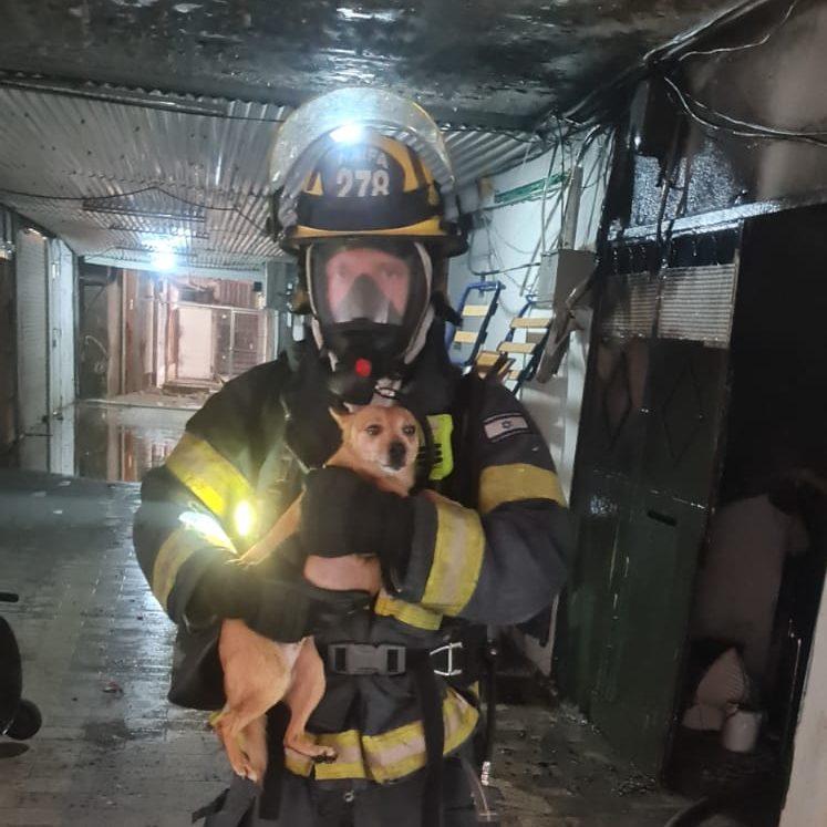 כלב שחולץ מהבניין (צילום: כבאות והצלה)
