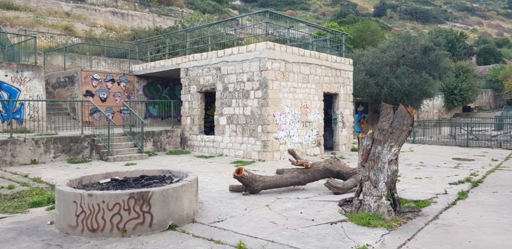 עץ התות השרוף ליד בית הגנן (צילום: אדריכלית רותי ליברטי שלו)