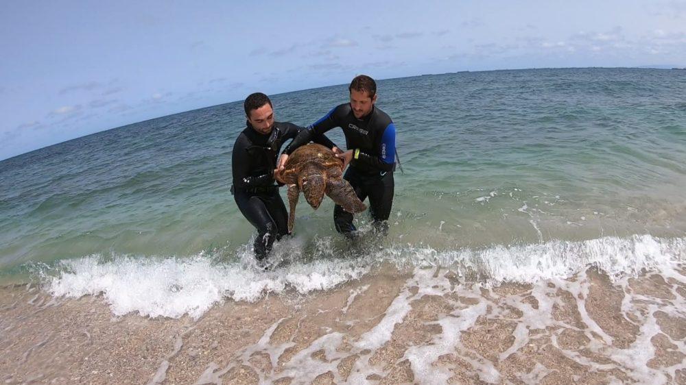 הצלת צב הים (צילום: טל רז)