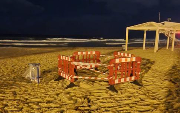 קן של צבת ים חומה בחוף זמיר בחיפה (צילום: חי פה בשטח)