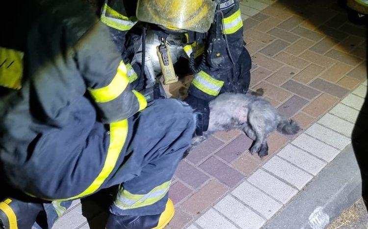חילוץ בעל חיים מהשריפה (צילום: כבאות והצלה)