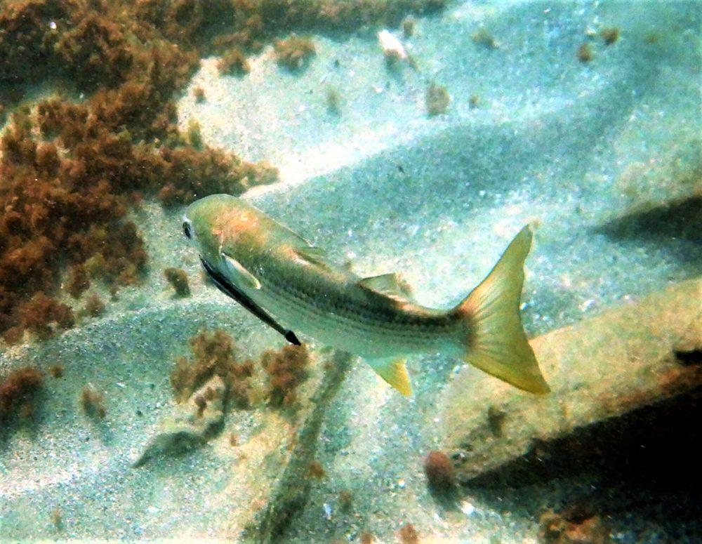 חסר מאפיין alt לתמונה הזו; שם הקובץ הוא haipo-news-of-haifa-fish-111021-1000x775.jpeg